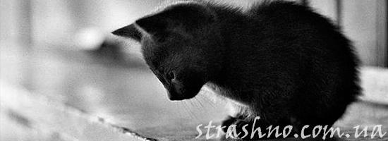 Рассказ девочки о котенке
