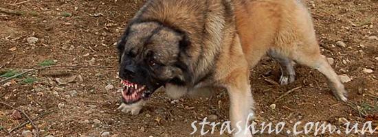 Злая собака