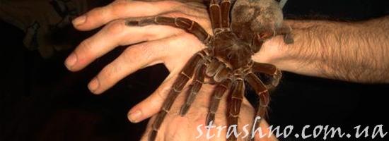 Страшный огромный паук