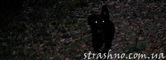 Странная черная собака