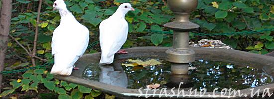 Птицы пьют с фонтана