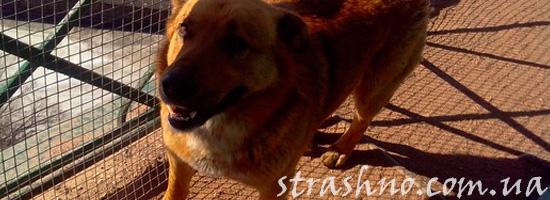 Поиски собаки и странные события