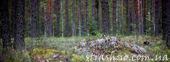 Лес возле лагеря