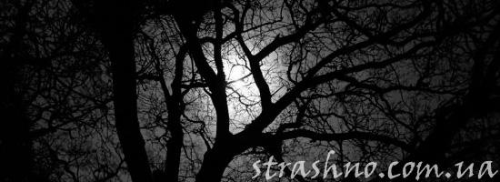 Странная ночь и страшный голос