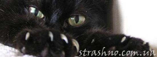 мистика когти кошка