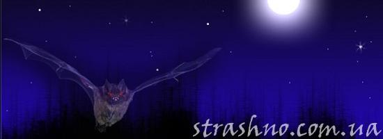 мистика летучая мышь