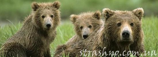 мистика медведи
