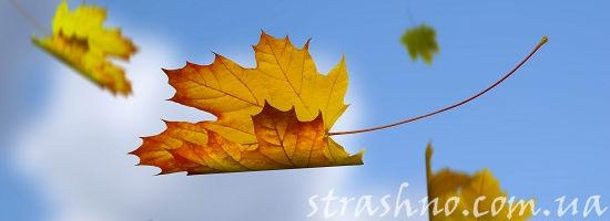 Осенний  кленовый лист