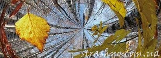 ветер листья
