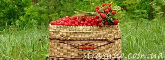 мистика лесные ягоды