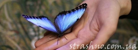 мистика мотылек на руке