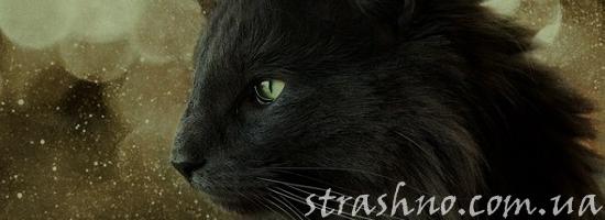 мистика норвежская кошка