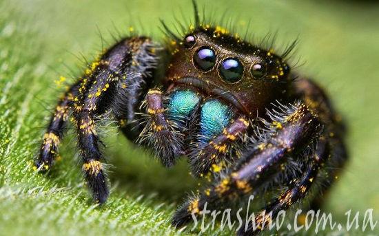 картинки страшные пауки