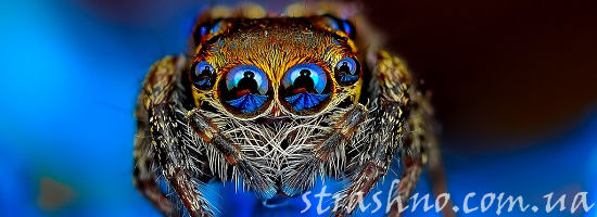 самые большие и страшные пауки в мире фото