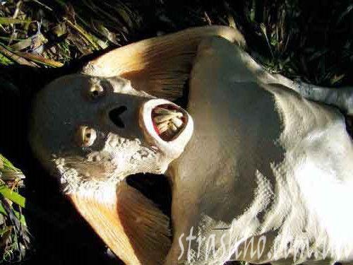Страшная мумия русалки