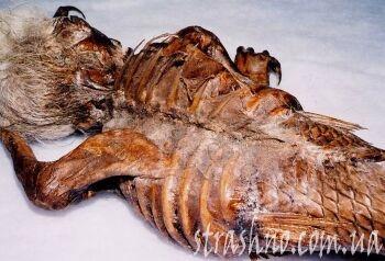 мумия русалки со спины