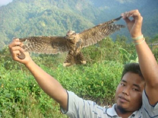 гибнущие птицы