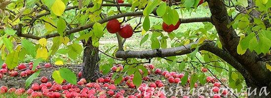 падающие яблоки