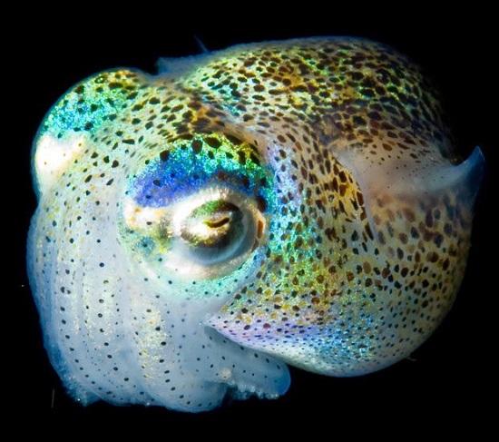 глубинное светящееся существо