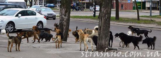 одичавшие собаки в городе