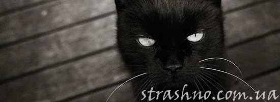 Черный кот с мистическими способностями