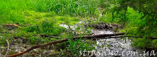 Странный лесной ручей