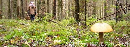 мистика грибники в лесу