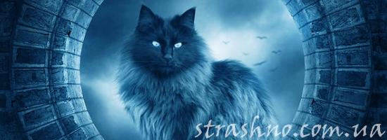 мистика кошка в ночи