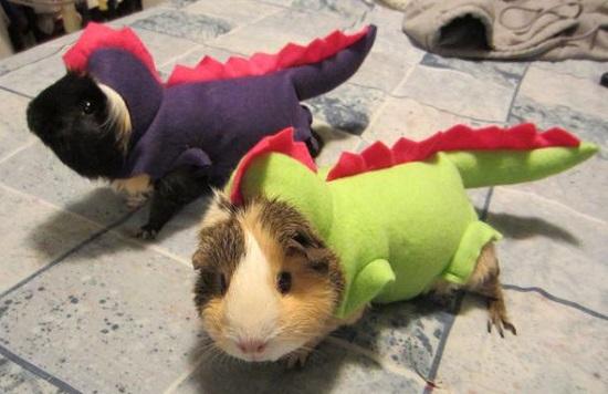 костюмы для животных на Halloween