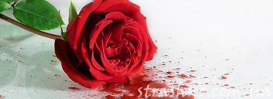 мистика кровавая роза