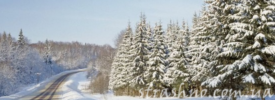 мистика дорога в зимнем лесу