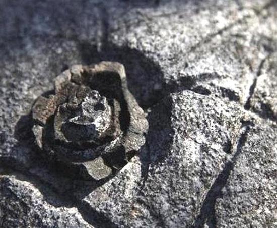 каменный цветок на скалах