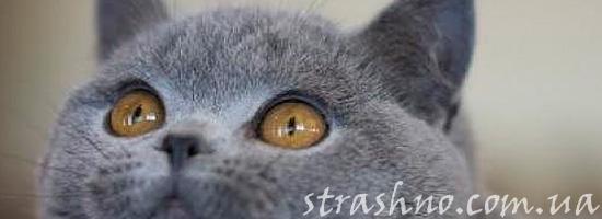Кошка смотрит на икону