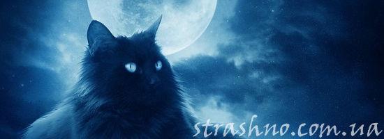 чёрный кот под луной