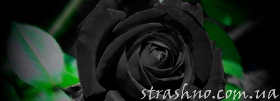 Мертвые розы для приворота