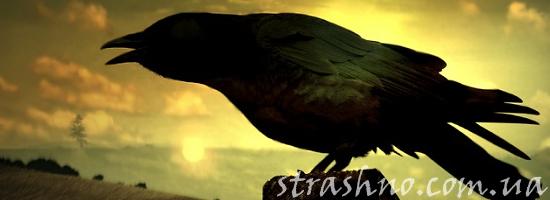мистика каркающий ворон