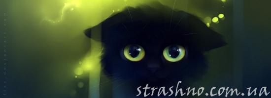 мистика зеленоглазый котик