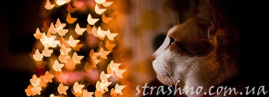 кот на фоне елки