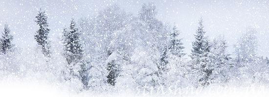 вьюга снежная метель