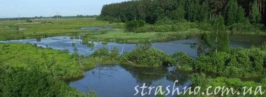 мистика трава у болота