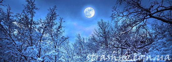 полнолуние в зимнем лесу
