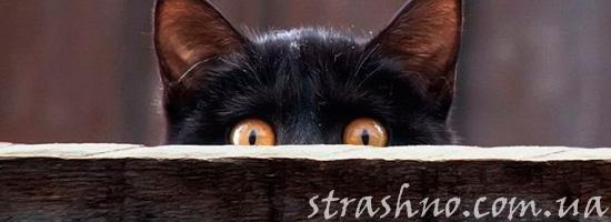 Черная кошка - к несчастью