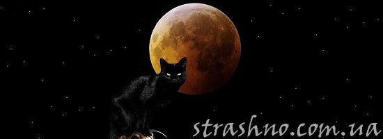чёрный кот в красное полнолуние