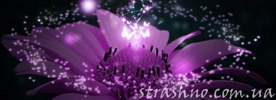 strashno-cvetok