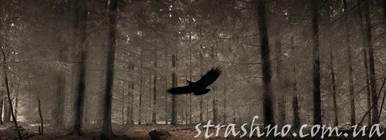 лесной ворон