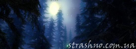 ночной сосновый лес