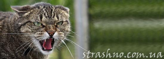одичавший кот