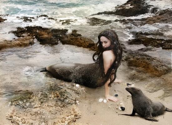 тюлени селки