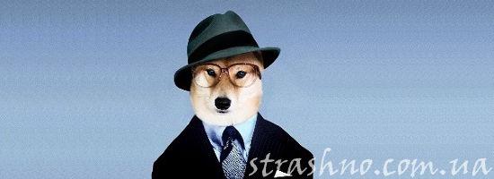 собака в шляпе и очках