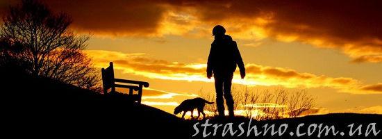 вечерний выгул собаки
